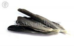 Перья вороны 15-18 см