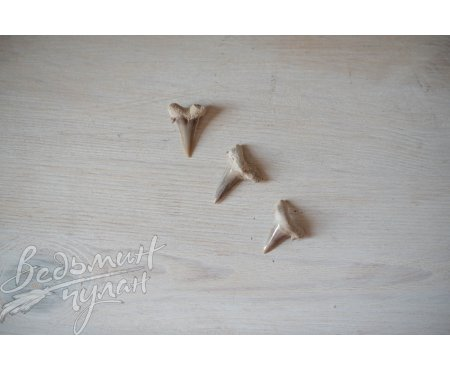 Зубы ископаемой акулы